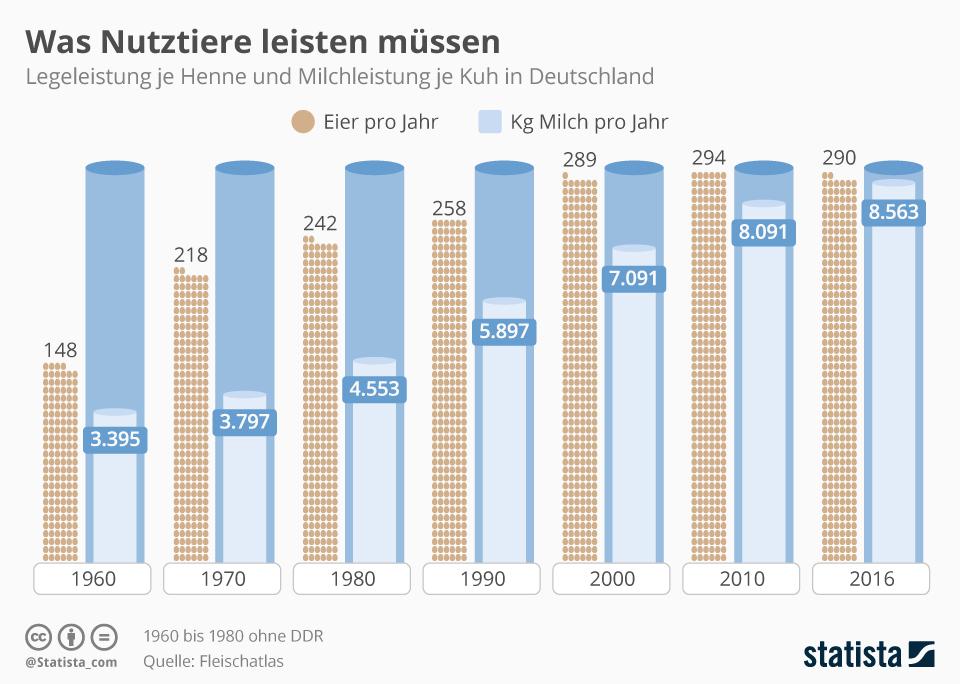 Infografik - Eier Legeleistung von Hennen pro Jahr